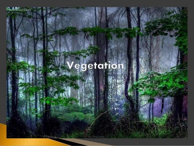 World Vegetation (BSTM-F1)