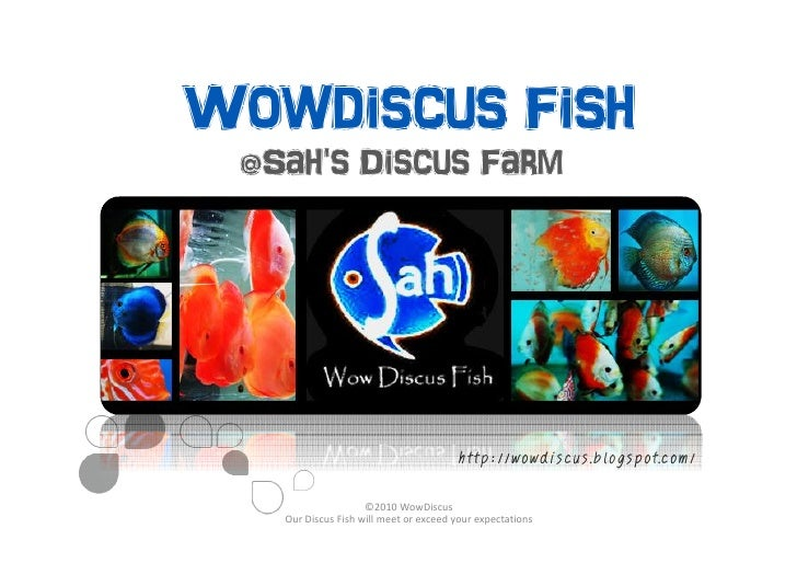 Wowdiscus Fish  @Sah's Discus Farm                                            http://wowdiscus.blogspot.com/              ...