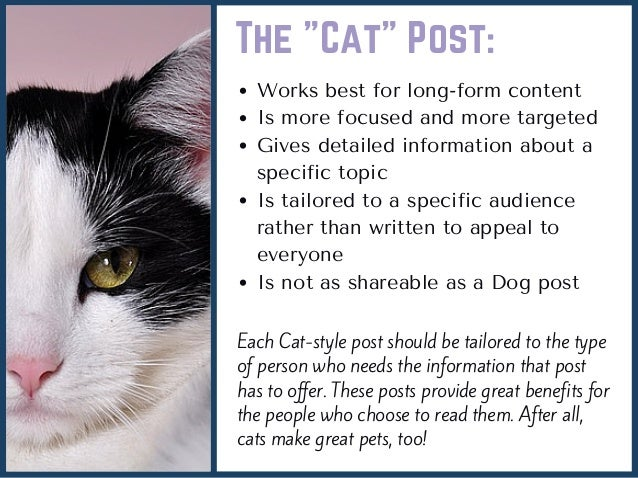 How To Adopt A Dog Or A Cat Topic