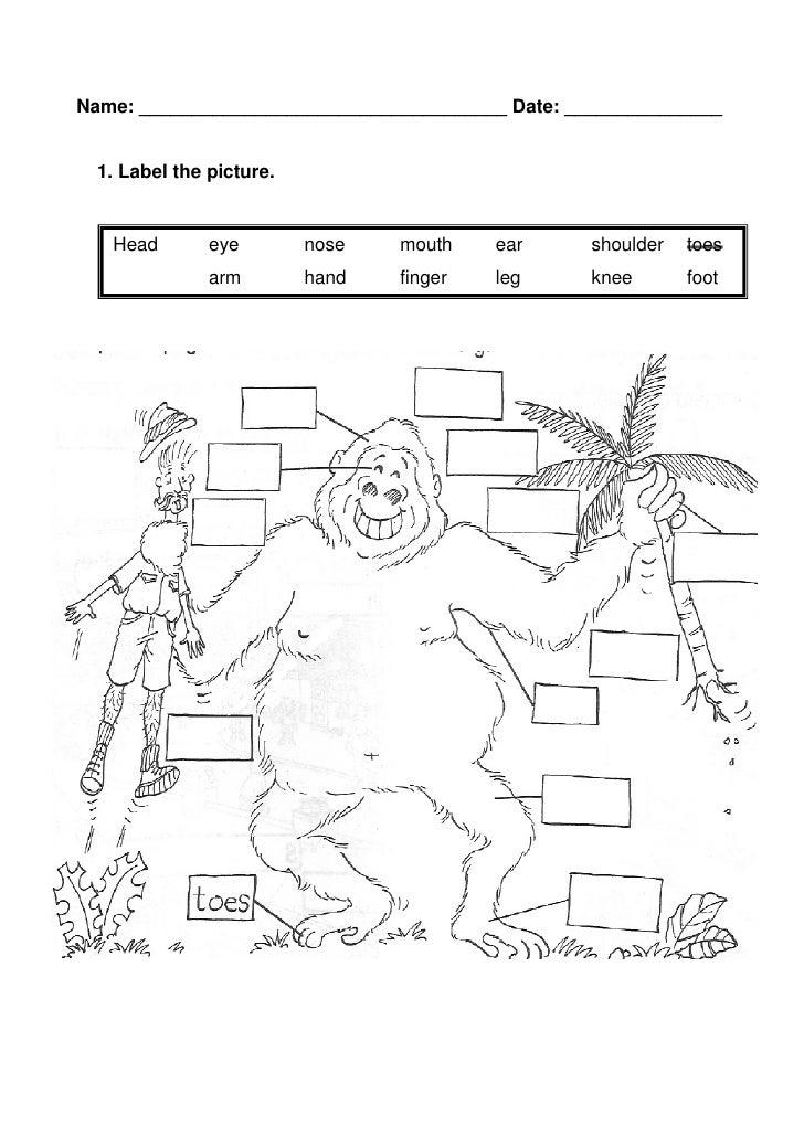 Label the gorilla