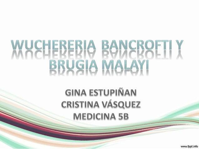 Wuchereriabancrofti y <br />Brugiamalayi<br />GINA ESTUPIÑAN<br />CRISTINA VÁSQUEZ<br />MEDICINA 5B<br />
