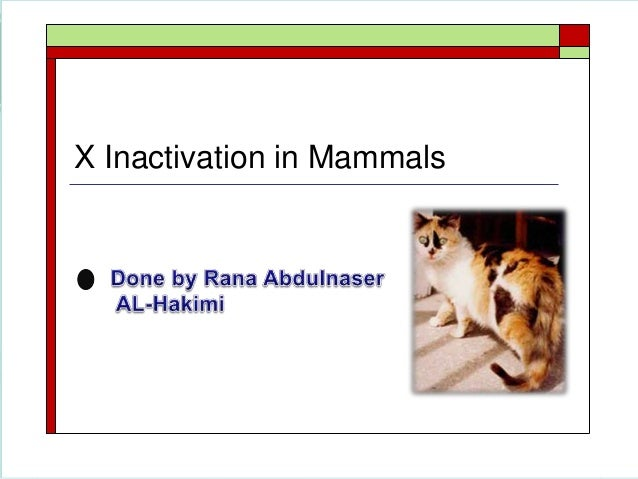 X Inactivation Mammals X Inactivation in Mammals