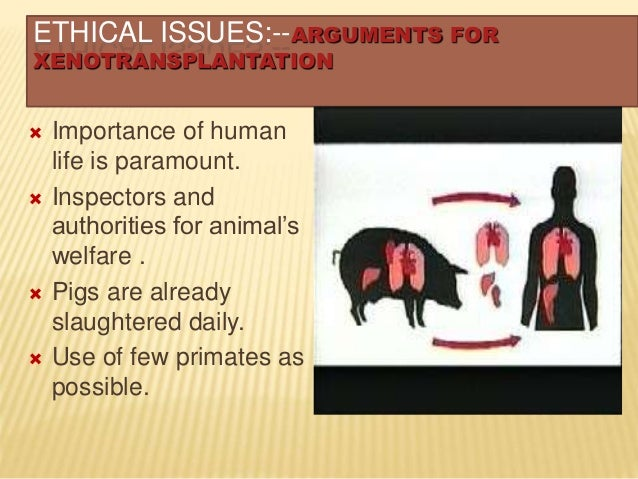 Use of few primates as Xenotransplantation Primates