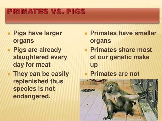 Primates have smaller Xenotransplantation Primates