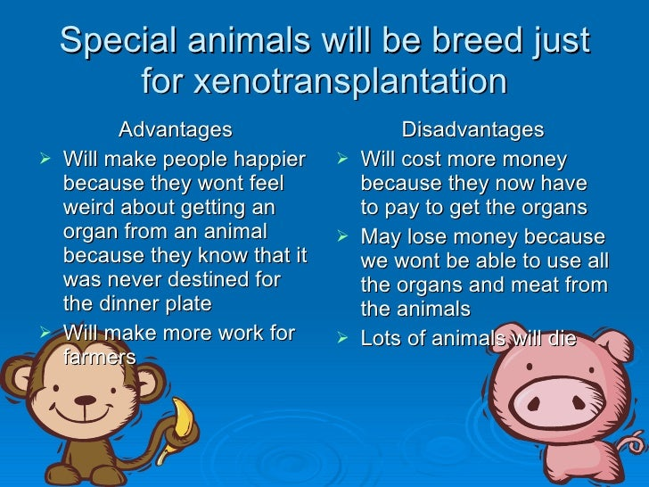 xenotransplants essay