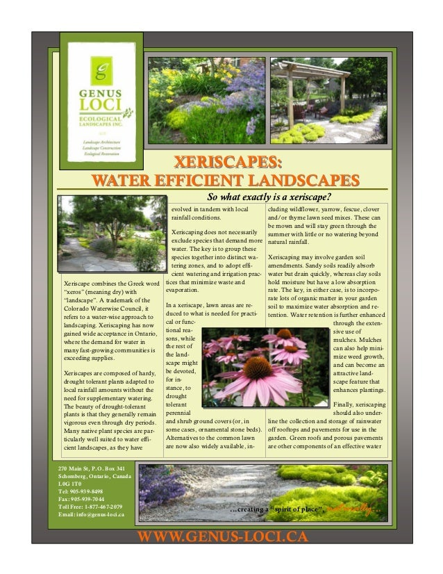 XERISCAPES:           WATER EFFICIENT LANDSCAPES                                                       So what exactly is ...