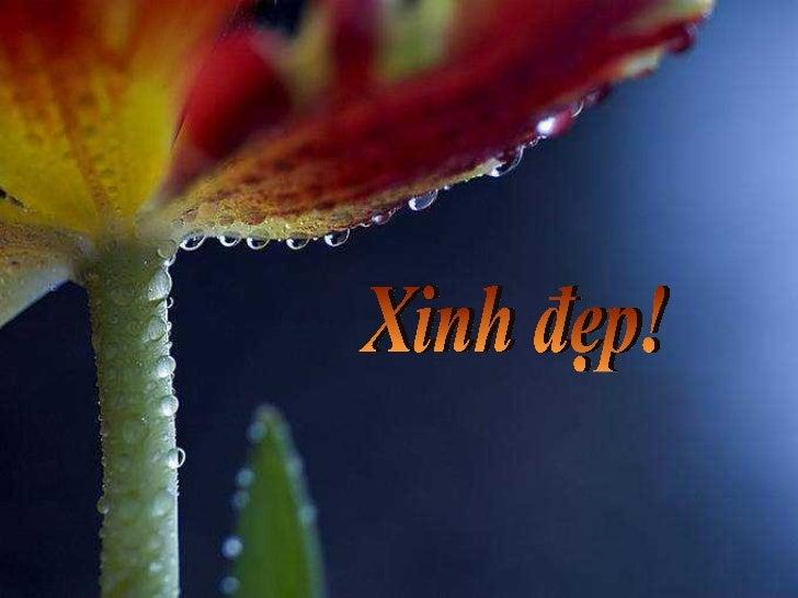 Xinh dep