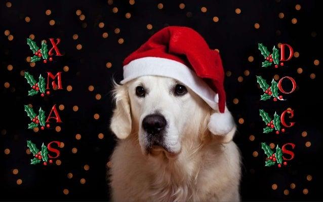 http://judy-christmas.blogspot.com http://fauna-flora.gportal.hu http://www.ppsparadicsom.net