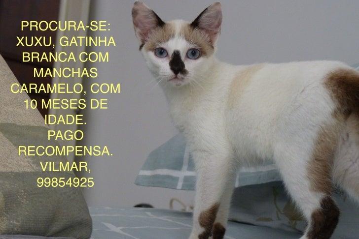 Xuxu - gatinha desaparecida