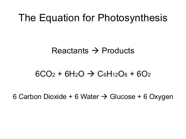 photosysthesis equation