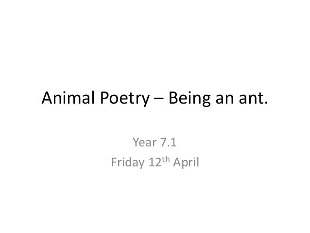 Animal Poetry – Being an ant.            Year 7.1        Friday 12th April