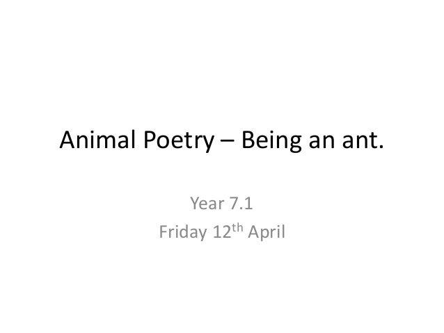 Y7 animal poetry   ants