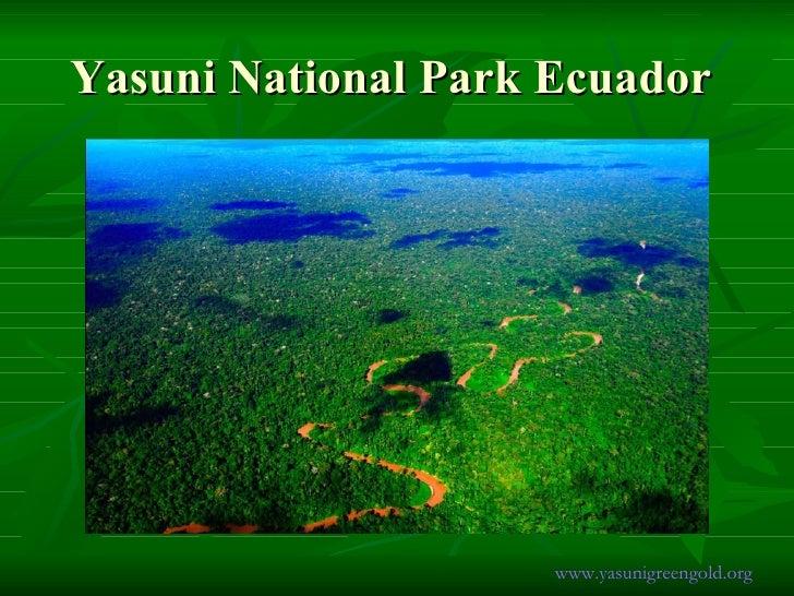 Yasuni National Park Ecuador  www.yasunigreengold.org