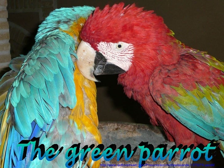 The green parrot