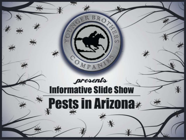 Younger Brothers Pests in Arizona: Identify Your Culprit