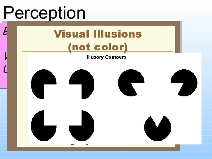 Perception Bell activity What is perception? Use the images to help you!