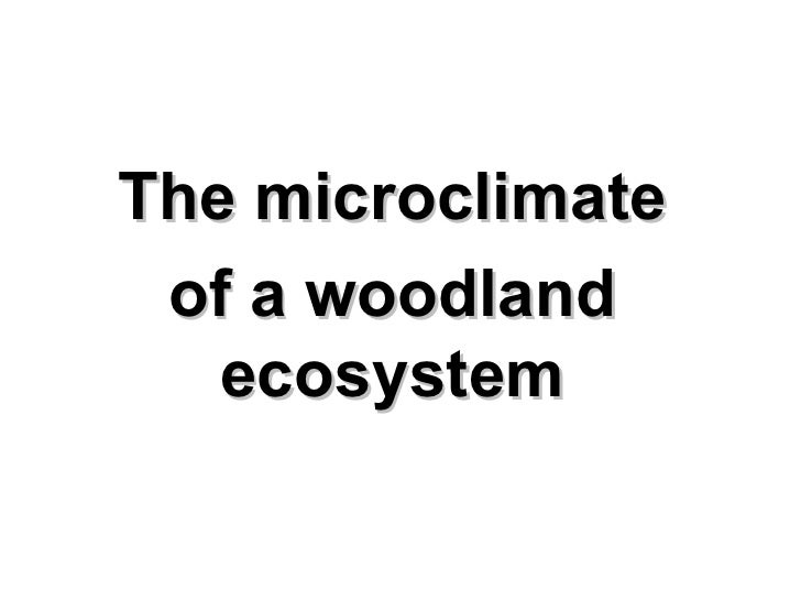 The microclimate of a woodland ecosystem