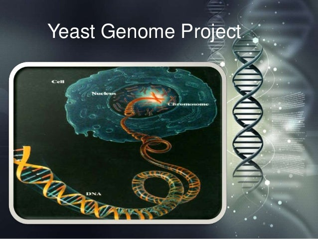 Yeast Genome Project