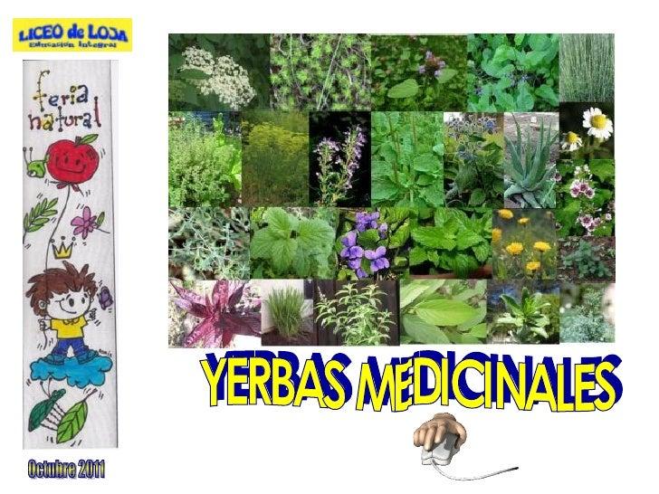 YERBAS MEDICINALES Octubre 2011
