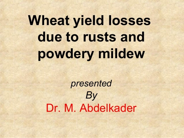Wheat yield losses due to rusts and powdery mildew      presented         By  Dr. M. Abdelkader