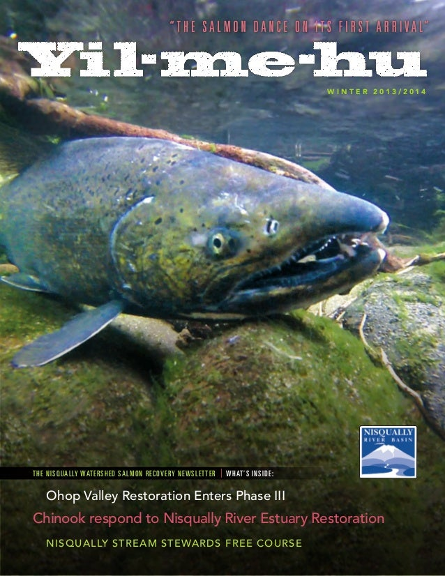WINTER 2013/2014  T H E NIS Q UALLY WATERSHED SALMON REC OVERY NEWS L E TTE R  | W H AT' S IN S ID E :  Ohop Valley Restor...