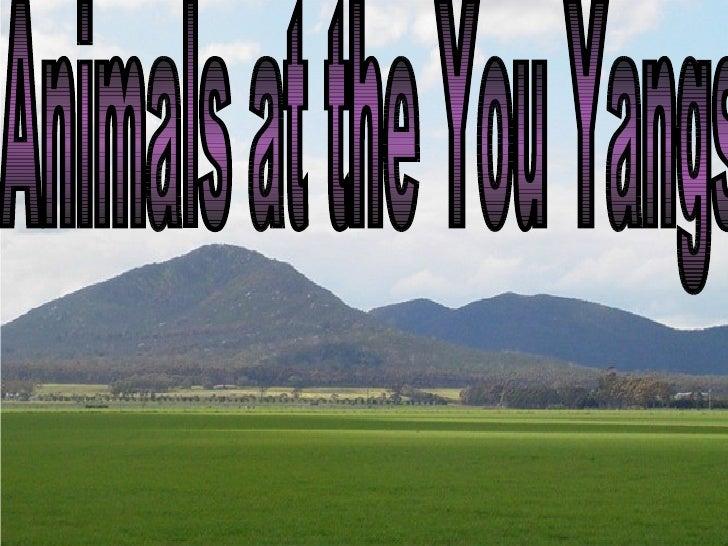 You Yangs