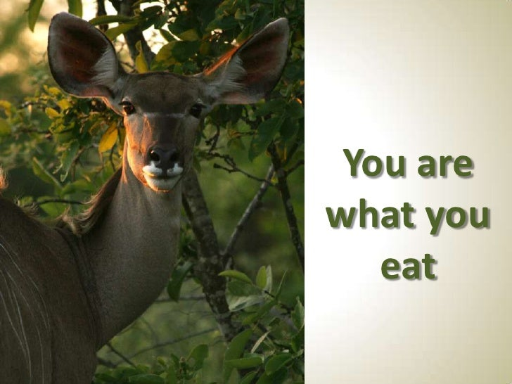 You are what you eat<br />