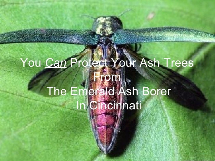 You can protect your trees from the Emerald Ash Borer