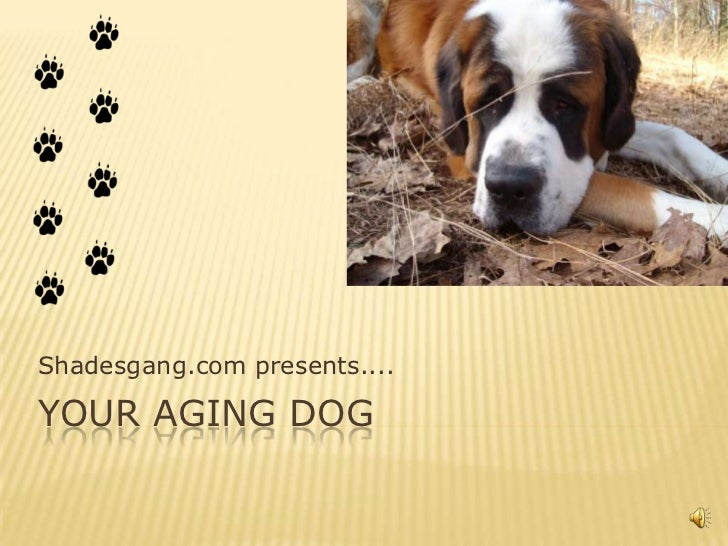 Shadesgang.com presents....YOUR AGING DOG
