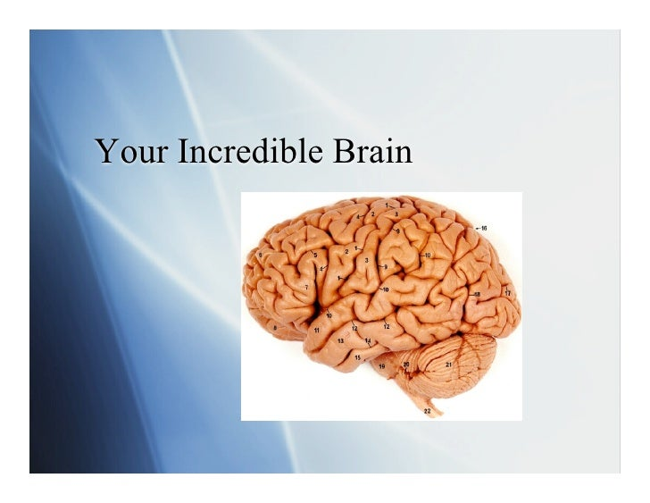 Your Incredible Brain: Part One