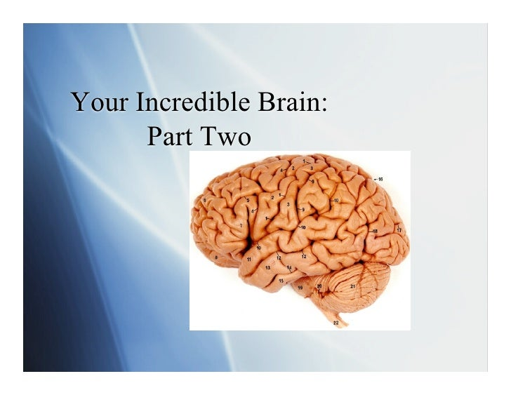 Your Incredible Brain:       Part Two