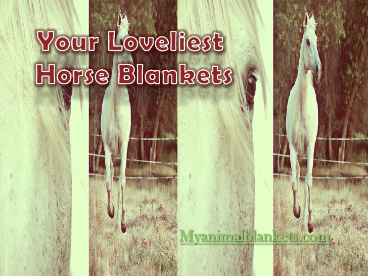 Myanimalblankets.com