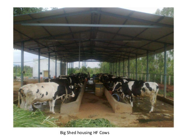 project report for dairy farms Project report for dairy farm - others gstr3b and gstr1 reconciliation (excel sheet) last minute revision costing cum solution analysis for may 18 attempt.