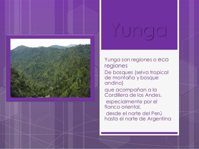 Yunga Yunga son regiones o eco  regiones  De bosques (selva tropical de montaña y bosque andino) que acompañan a la Cordil...