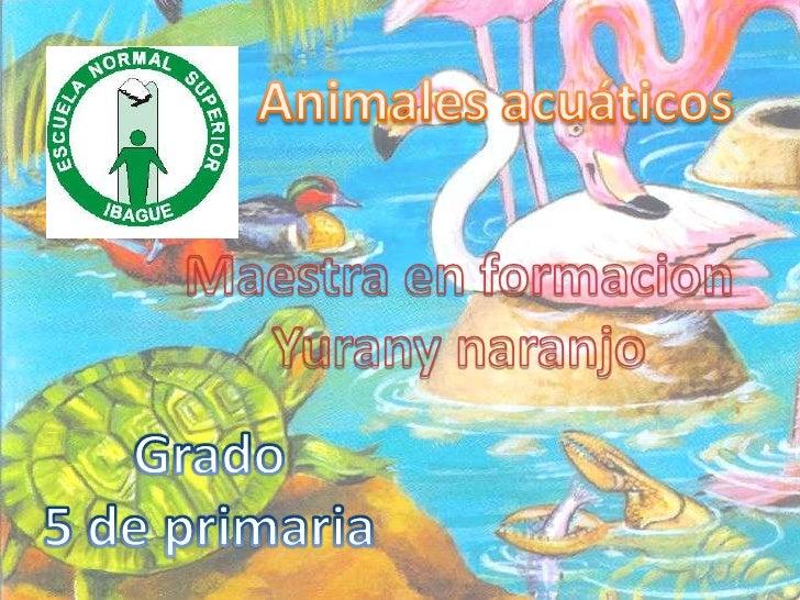Animales acuaticosSe deben distinguir entre losanimales que pueden aprovecharpara la respiraciónel oxígeno disuelto en el ...