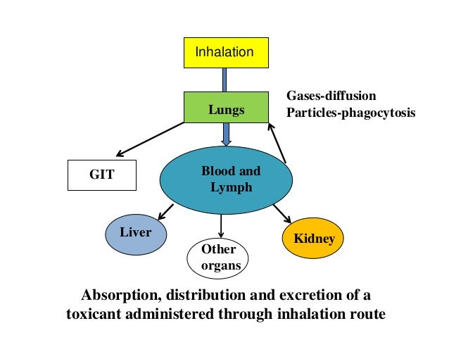 the excretion and elimination of toxicants and their metabolites Elimination of toxicants in the feces occurs from two processes: excretion in bile, which then enters the intestine, and direct excretion into the lumen of the gastrointestinal tract the biliary route is an important mechanism for fecal excretion of xenobiotics and is even more important for the excretion of their metabolites.