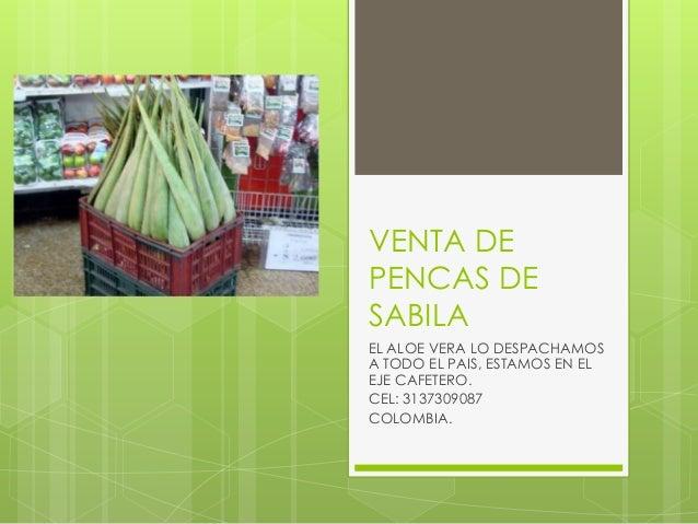 VENTA DE PENCAS DE SABILA EL ALOE VERA LO DESPACHAMOS A TODO EL PAIS, ESTAMOS EN EL EJE CAFETERO. CEL: 3137309087 COLOMBIA.