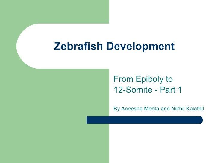 Zebrafish Development From Epiboly to  12-Somite - Part 1 By Aneesha Mehta and Nikhil Kalathil