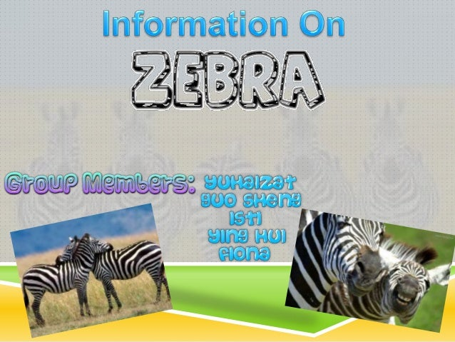 Zebras are equids. Every zebra has its own unique pattern of black and white stripes. There are a number of different t...