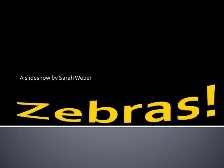 Zebras!<br />A slideshow by Sarah Weber<br />