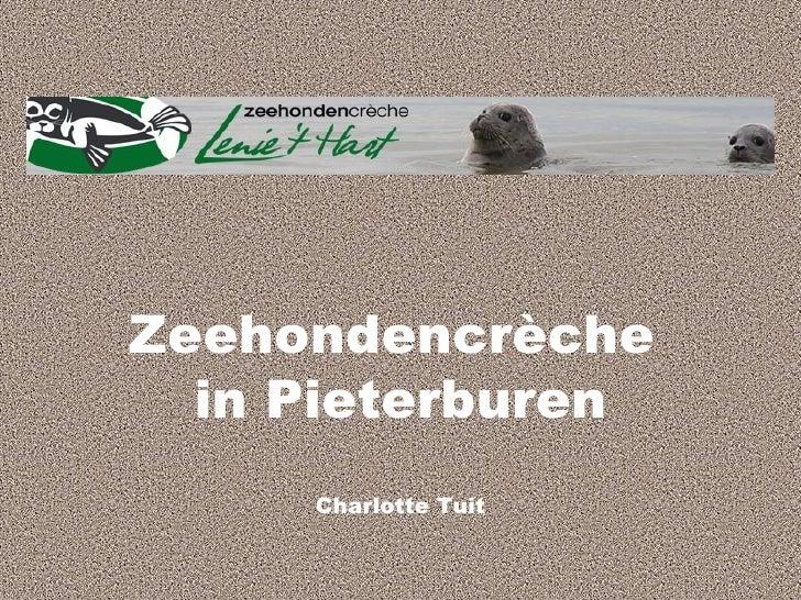 Charlotte T. Zeehondencreche Pieterburen