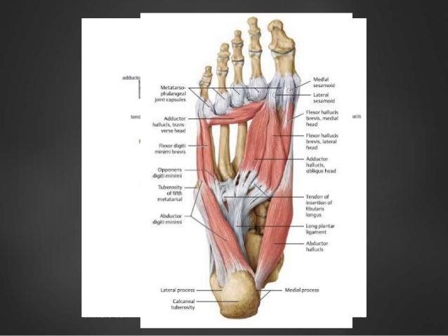 Die Entstellung der Finger auf dem Bein