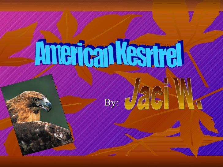 By: Jaci W. American Kesrtrel