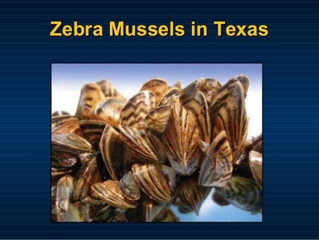 Zebra Mussels in Texas
