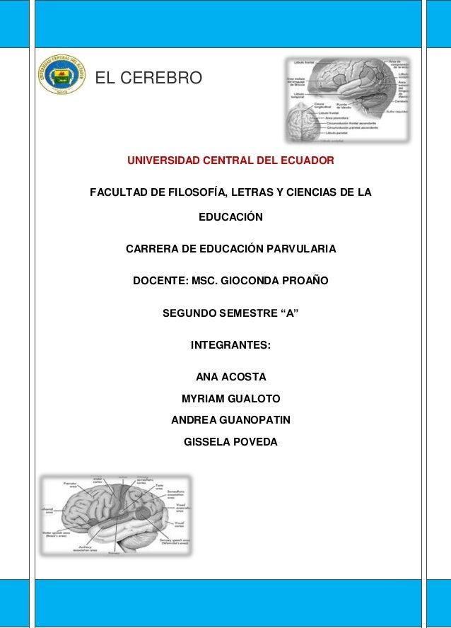 EL CEREBRO UNIVERSIDAD CENTRAL DEL ECUADOR FACULTAD DE FILOSOFÍA, LETRAS Y CIENCIAS DE LA EDUCACIÓN CARRERA DE EDUCACIÓN P...
