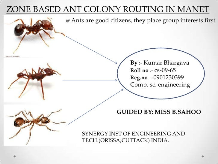 ZONE BASED ANT COLONY ROUTING IN MANET           @ Ants are good citizens, they place group interests first               ...