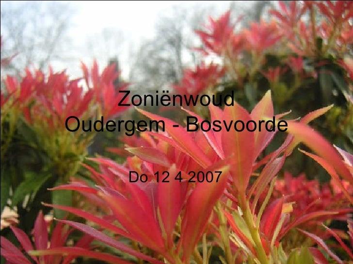Zoniënwoud 2007 04 12