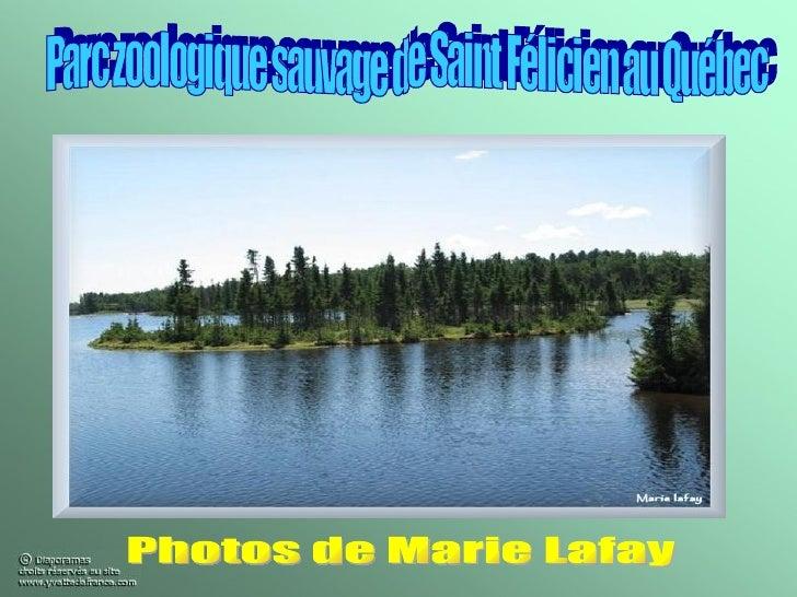 Parc zoologique sauvage de Saint Félicien au Québec Photos de Marie Lafay