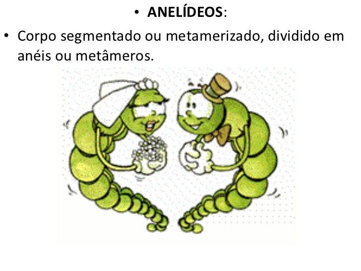 <ul><li>ANELÍDEOS : </li></ul><ul><li>Corpo segmentado ou metamerizado, dividido em anéis ou metâmeros. </li></ul>