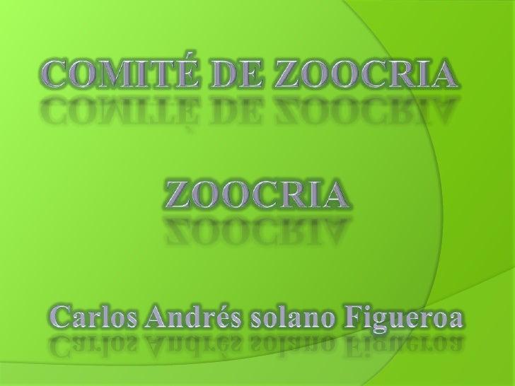 COMITÉ DE ZOOCRIA<br />ZOOCRIA<br />Carlos Andrés solano Figueroa<br />
